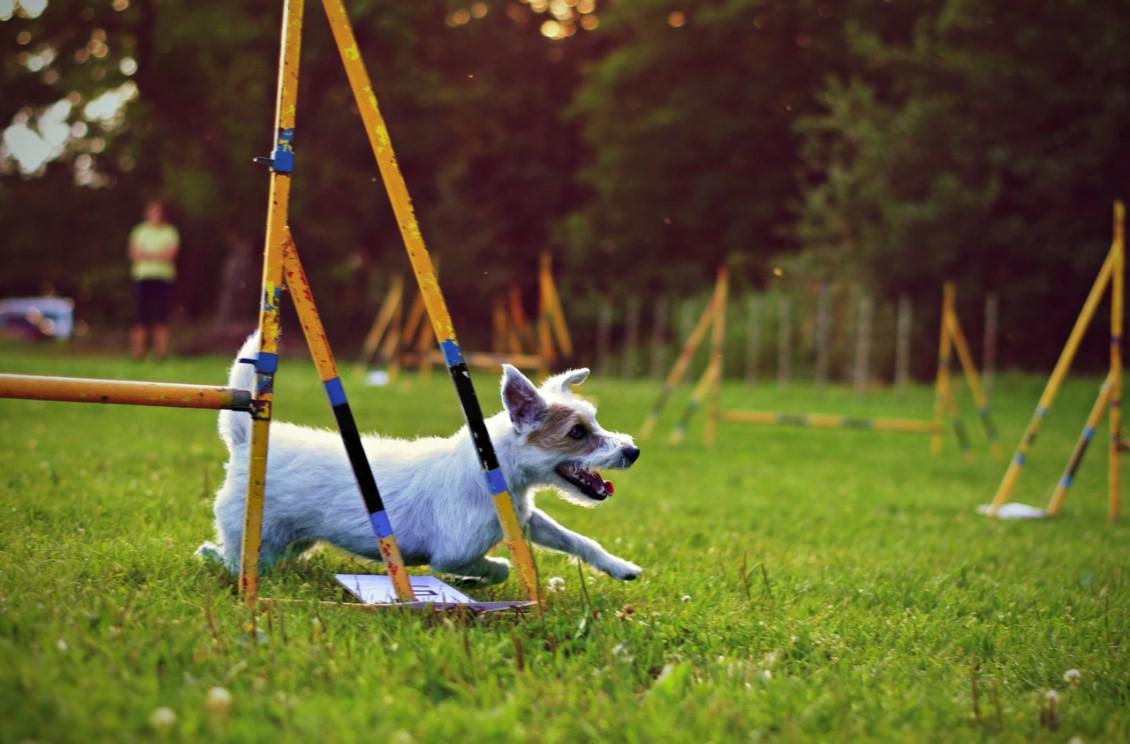 So trainiert man seinen Hund richtig