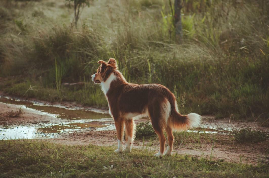 Können Hunde dieselben Allergien bekommen wie Menschen?